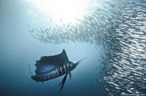 Apre i battenti il Malta National Aquarium