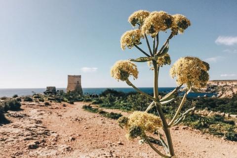 Trekking a Malta: il mio bellissimo itinerario con vista mare