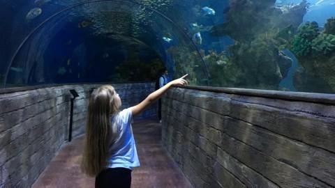 Il Malta National Aquarium, un'attrazione per grandi e bambini