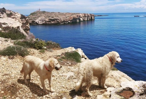 A Malta con il cane,  suggerimenti utili per una vacanza a quattro zampe
