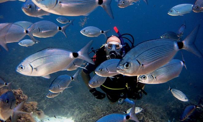 Diving a Malta – acque cristalline