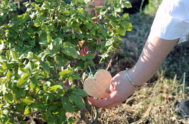 Lovers' Tree Project, un albero per ogni matrimonio a Malta