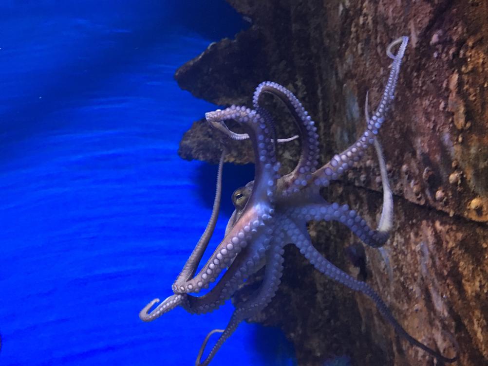 Malta National Aquarium_3