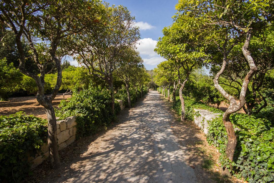buskett-gardens_Malta