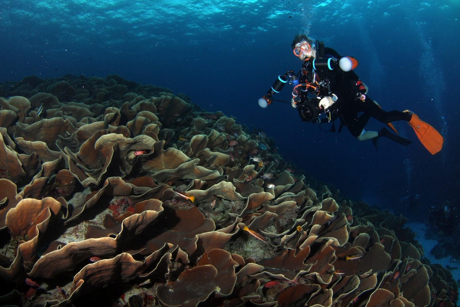 diving malta coral cave