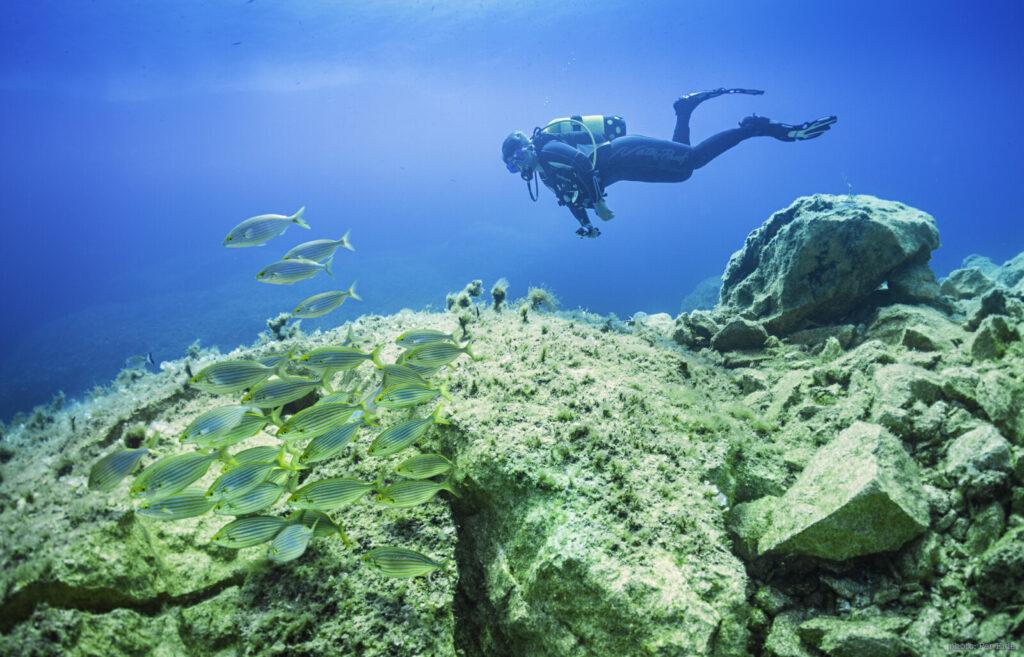 Diver and fish Malta